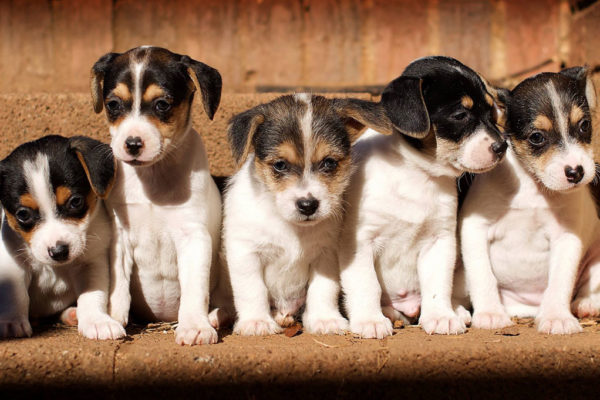 Stepping Stones Canine Rescue: Helping Pair the Perfect Dog with the Perfect Family