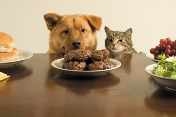 The Do's and Don'ts of Feeding Pets from the Table