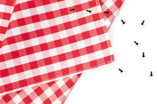 Picnics:  Celebrate National Picnic Month