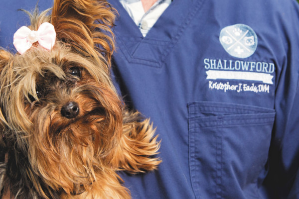 Shallowford Animal Hospital:  Taking Care of You and Your Four-Legged Friend