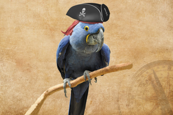 A Pirate's Life International Pirate Day—September 19
