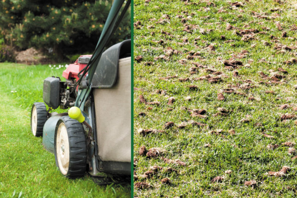 Discover the Importance of Fall Aerification with the Experts at Weed Man Lawn Care