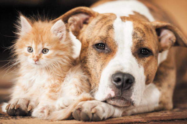 10 Steps to Introducing a Baby to a Senior Citizen:  Pet Edition