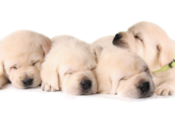 Can We Get a Puppy, PLEEEZE? Choosing the Best Breed for Your Family