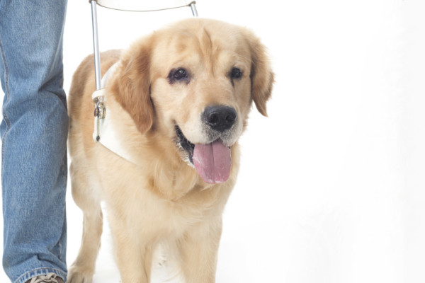 Can I Pet Your Dog? Etiquette for Service Dogs