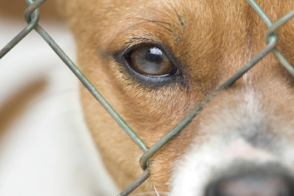 Adopt-A-Shelter-Dog-Month: Bring Home Your New Canine Companion This October!