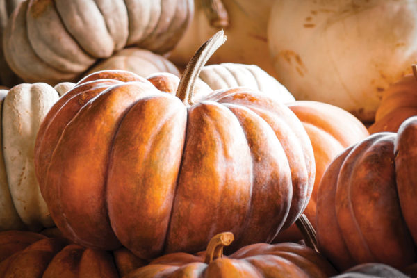 Kids in the Kitchen: Pumpkin Season Recipes