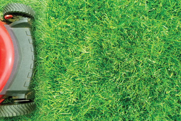 Why is Lawn Care Important?
