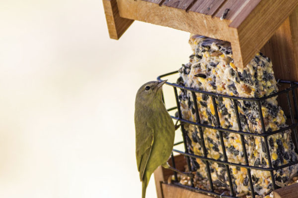 Feed the Birds, DIY Style, Part Two