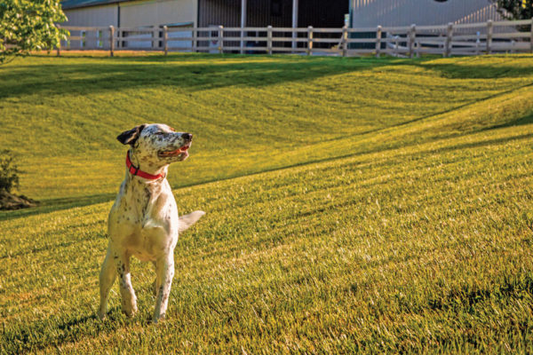 Godbey Creek Canine Rescue and Boarding: New Premiere Boarding Facility in Davie County!