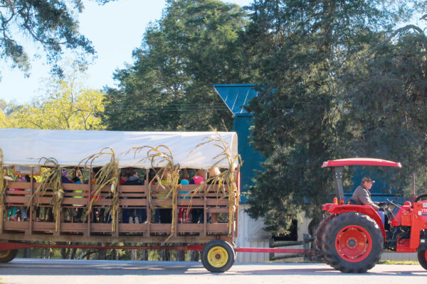 Tanglewood Stables Pumpkin Picking Hayrides Are Back!