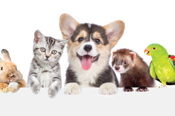 """""""Fido,"""" """"Tom,"""" """"Thumper,"""" or """"Fawkes"""": Choosing the Family's First Pet"""