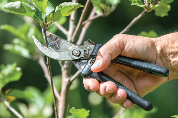 Safe Pruning Practices