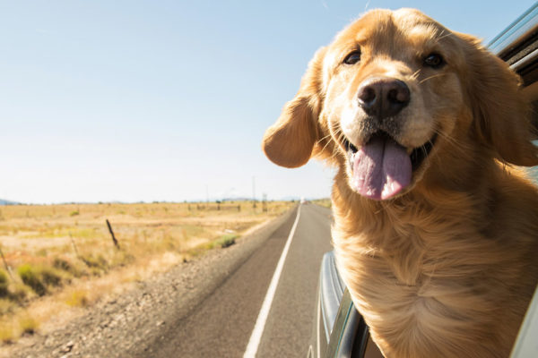 Road Trip Tips: Fur-Baby Addition