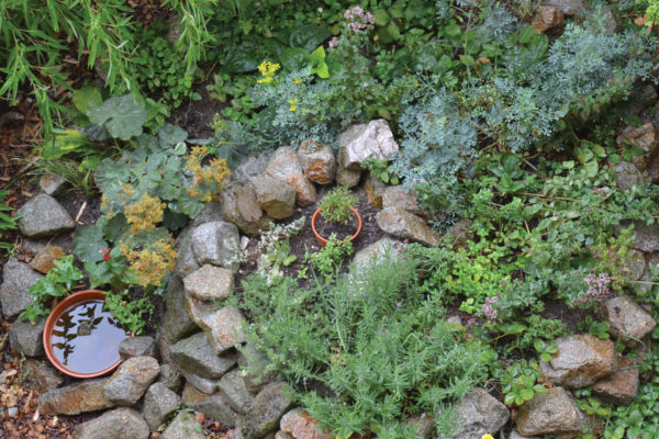 Integrating Permaculture into Your Life
