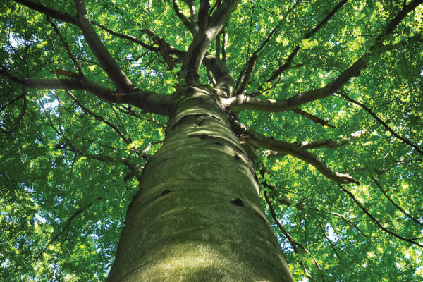 The Gifts of Native Trees