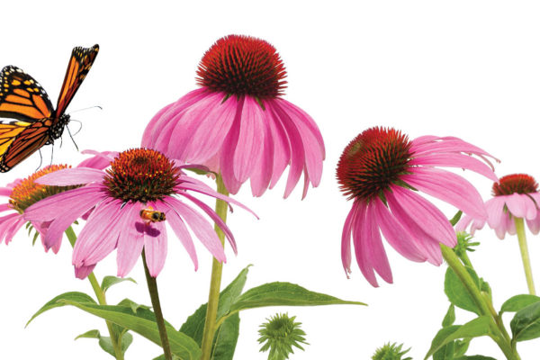 Teaching Children the Value of Pollinators