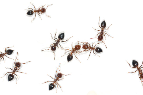 Eliminating Pests in the Home